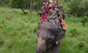 jungle-safari-tour